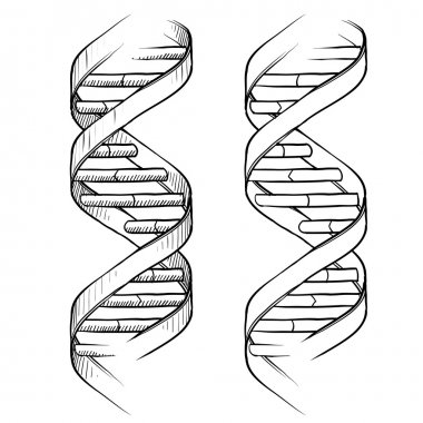 DNA double helix sketch