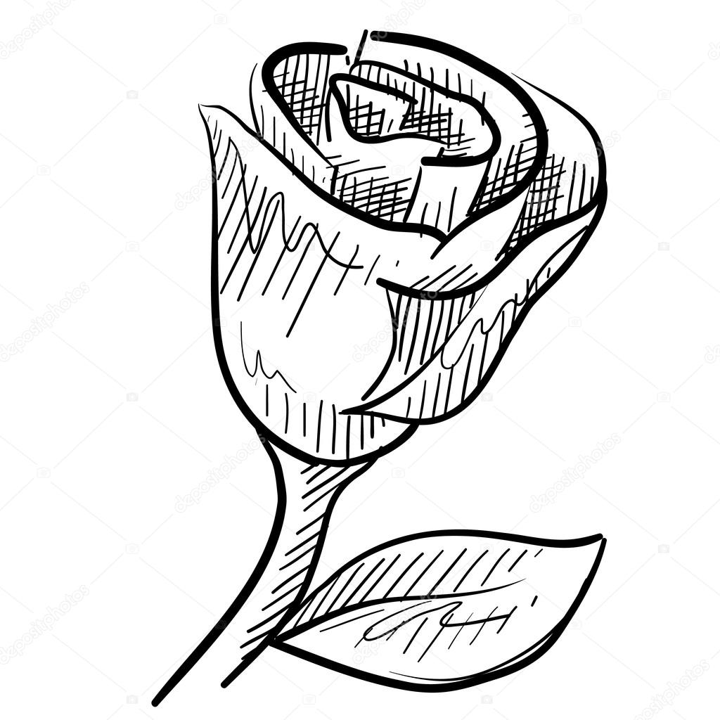 desenho de flor rosa romântica vetor de stock lhfgraphics 13981821