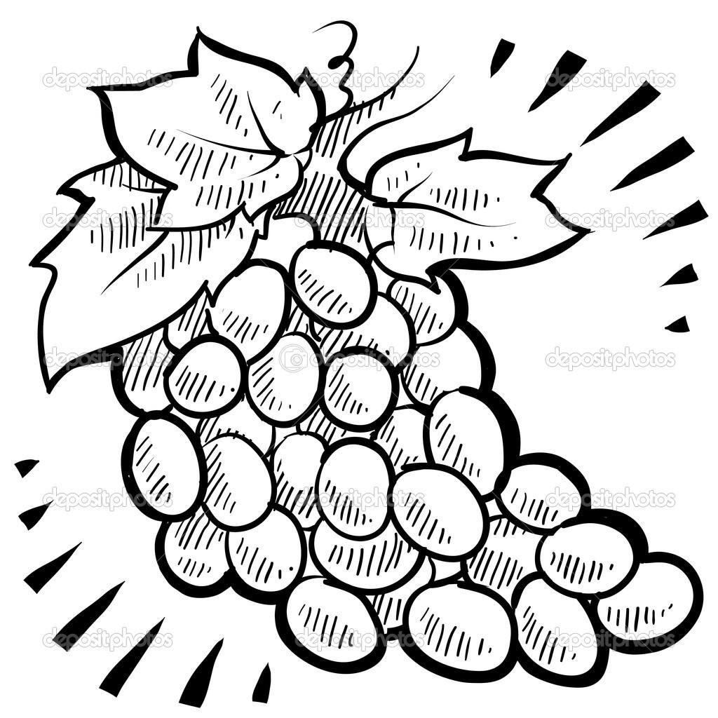 racimo de uvas fruta sketch — Vector de stock © lhfgraphics #13986596