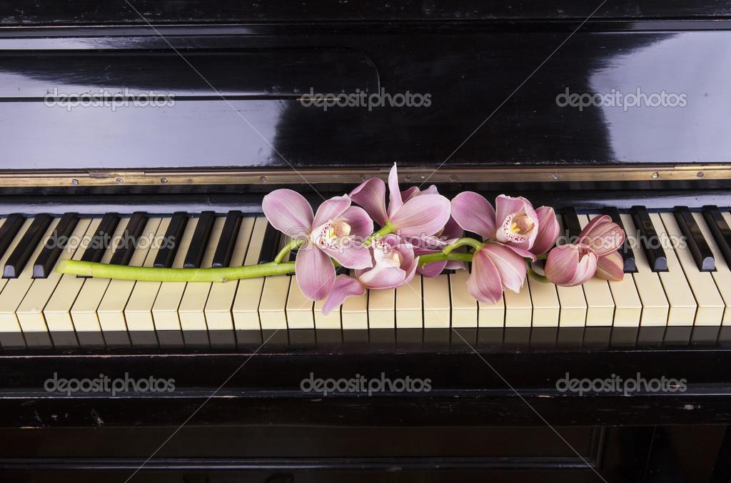 Фортепьяно фото