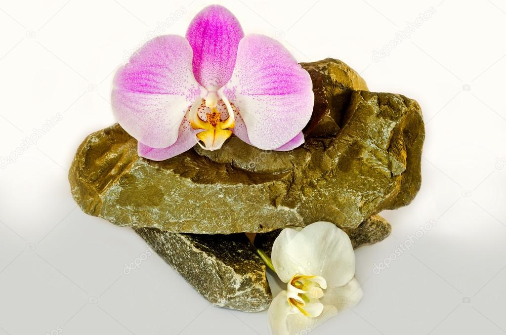 Tender orchids lie on wild natural stones on a white background.