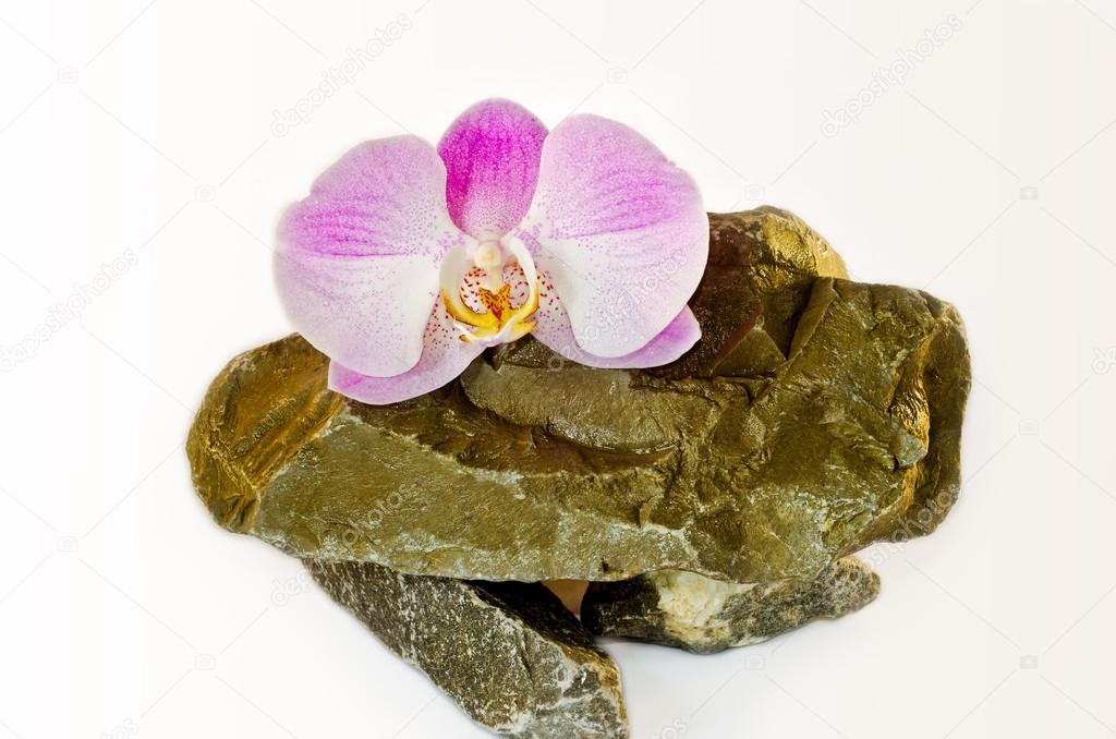 Tender pink orchids lies on wild natural stones on a white backg