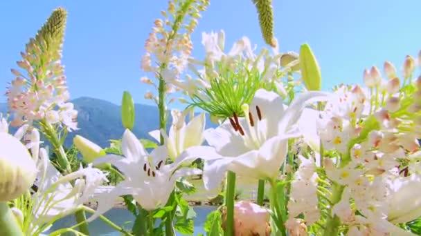 Krásné letní květiny