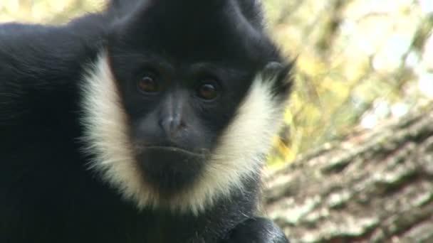 zvědavé opice zblízka