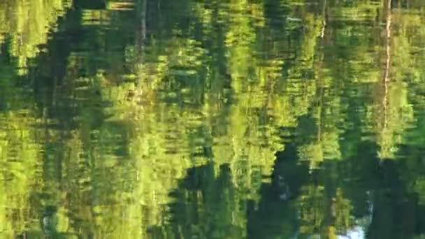 stromy odráží ve vodě