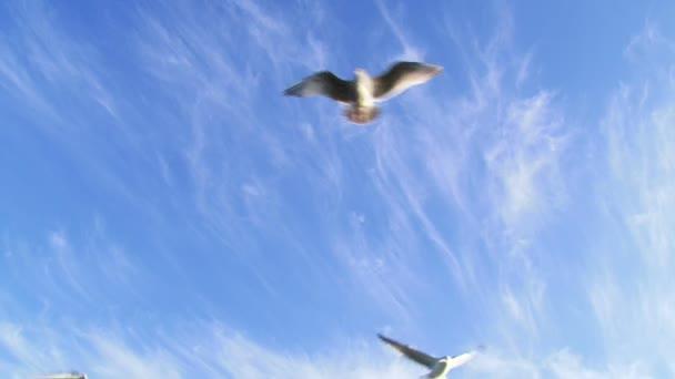 madarak repül az égen