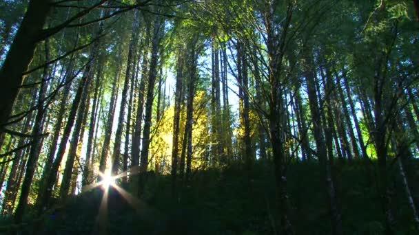svěží a hustý les poblíž slunce.