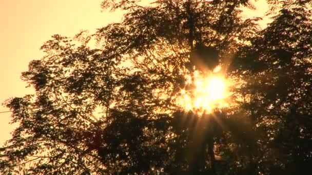 sluníčko hvězdné erupce plápolají vítr listí při západu slunce.
