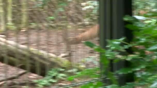 oroszlán-az állatkertben