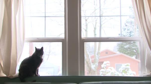 kočka se dívá z okna