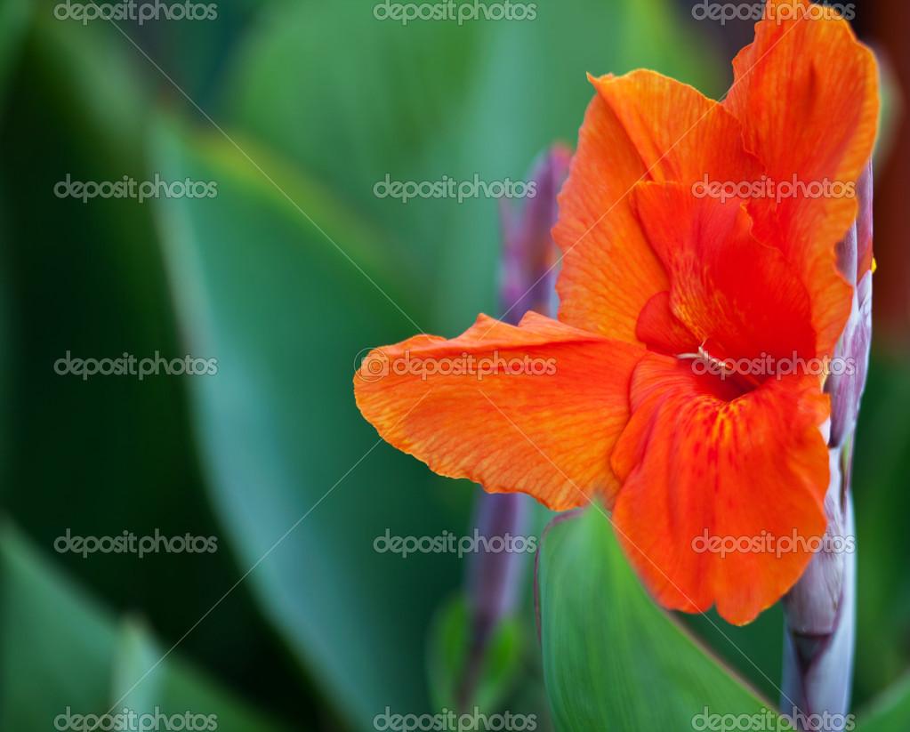 Fleur Tropique Photographie Yulia Kotina C 30938709