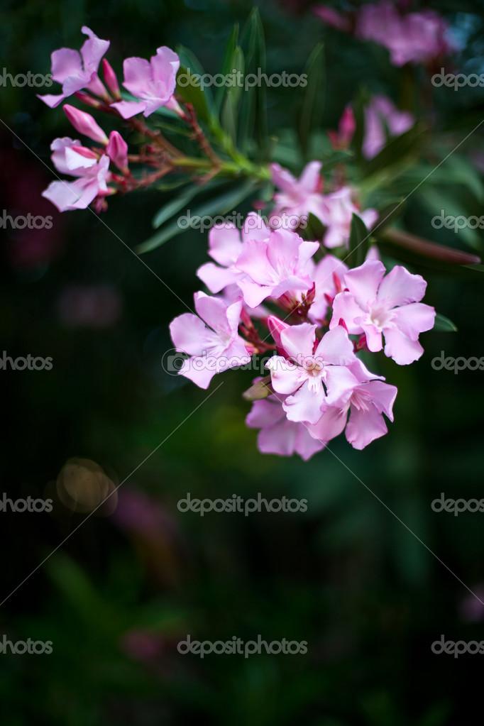 Fleur Tropique Photographie Yulia Kotina C 30938723
