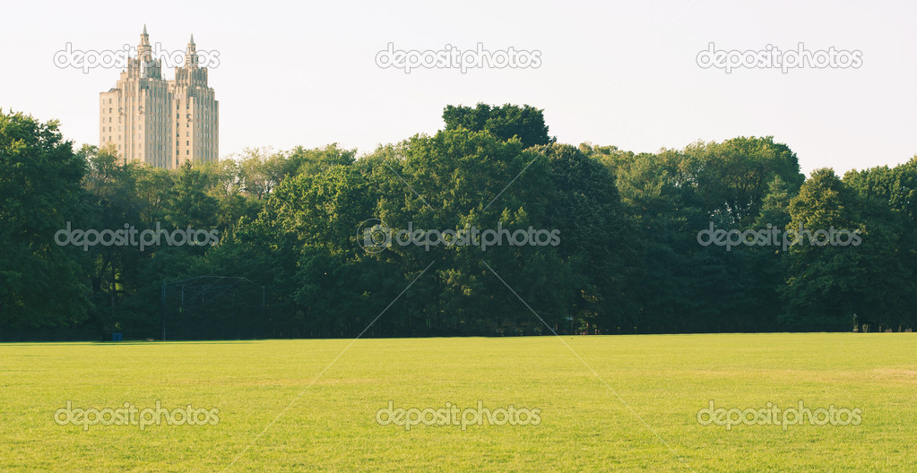 Empty grass in Central Park, New York City