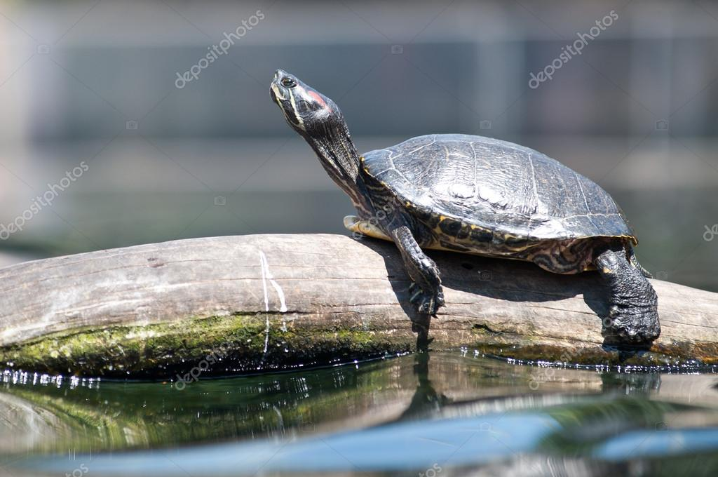 Turtle resting on a branch