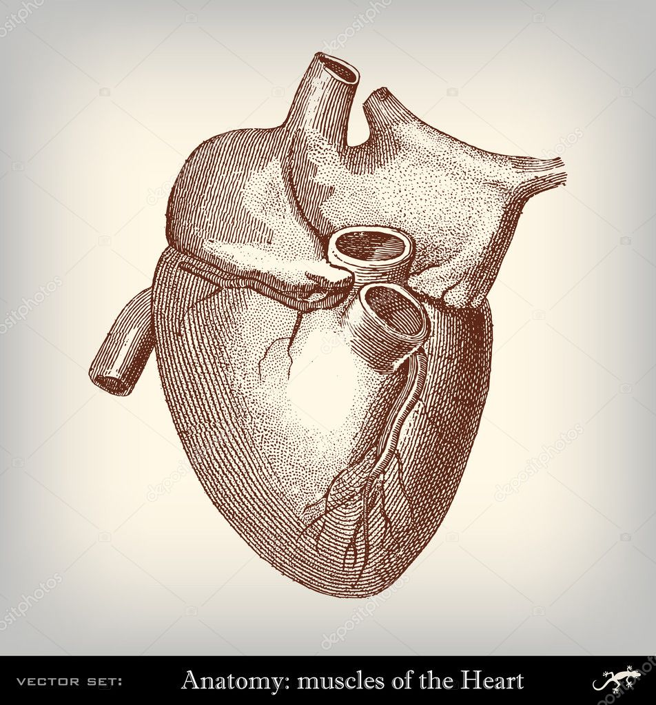 Engraving Vintage Heart Stock Vector Pio3 18835735