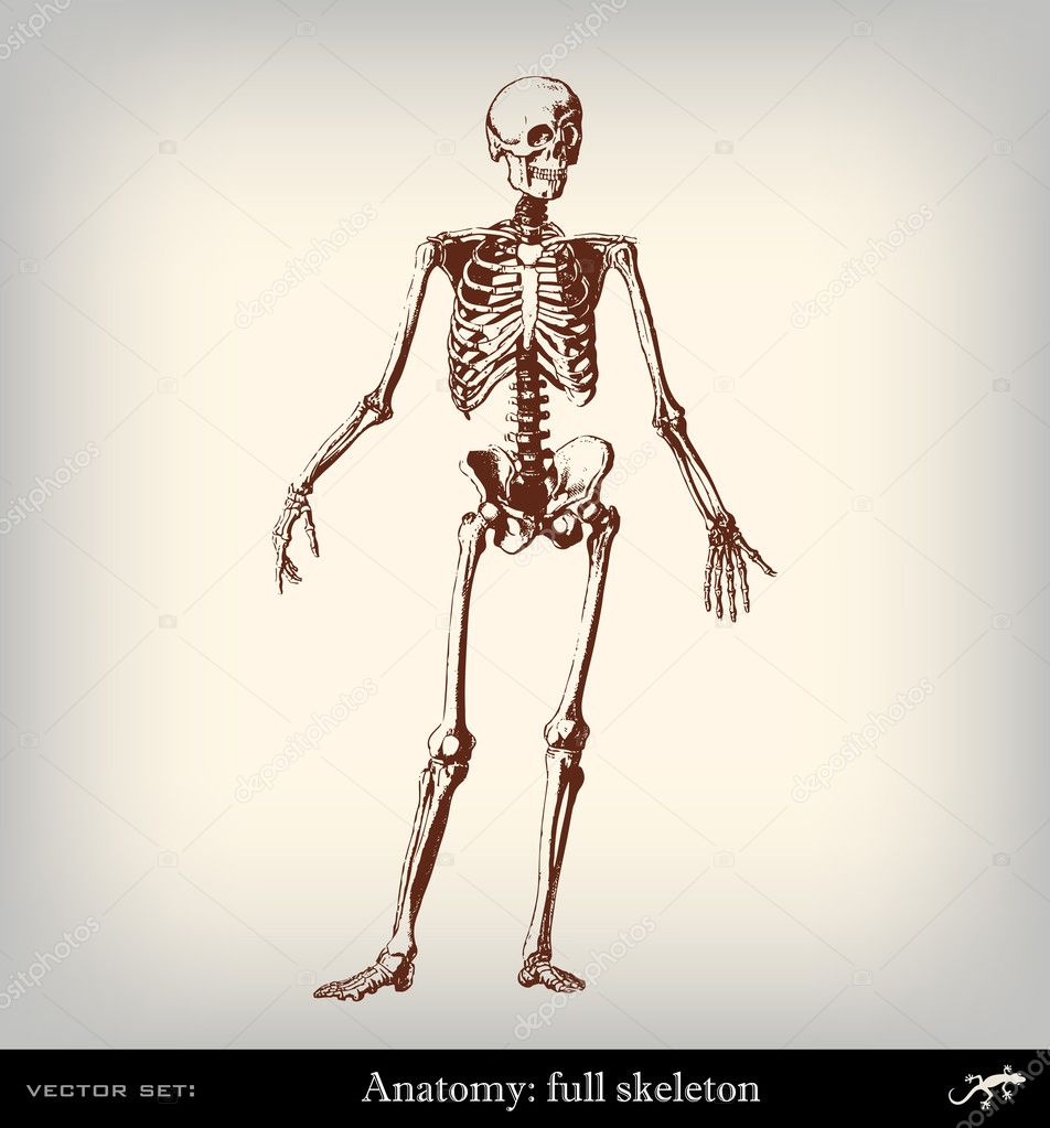 Engraving vintage full skeleton
