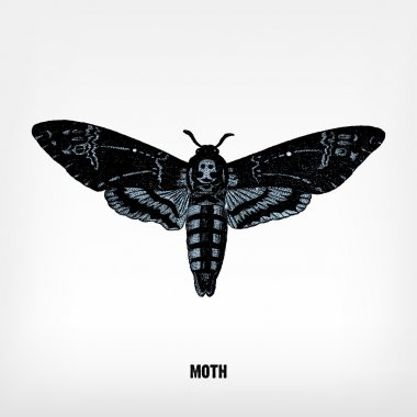 Engraving vintage Moth