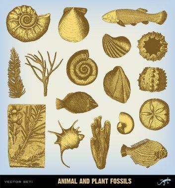 Engraving vintage Fossils set illustrations.