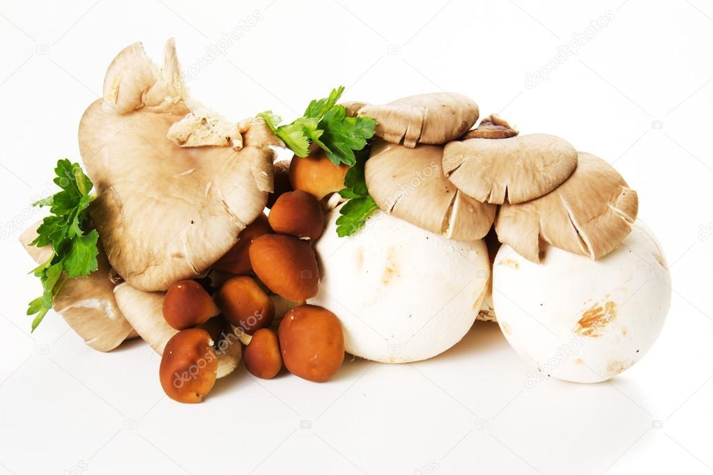 variety mushrooms isolated