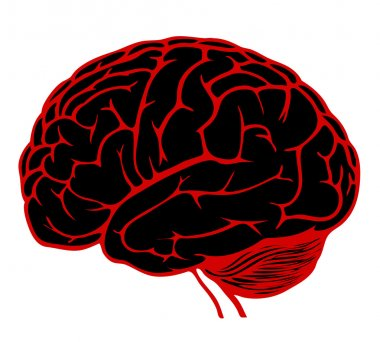 Model of human brain. eps10 vector illustration