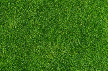 Close up on natural lawn texture stock vector