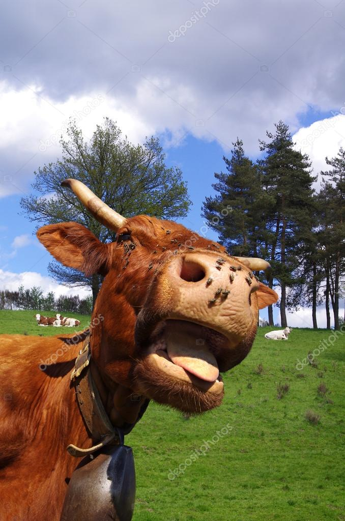Photo de vache drole colorier les enfants - Photo de vache drole ...