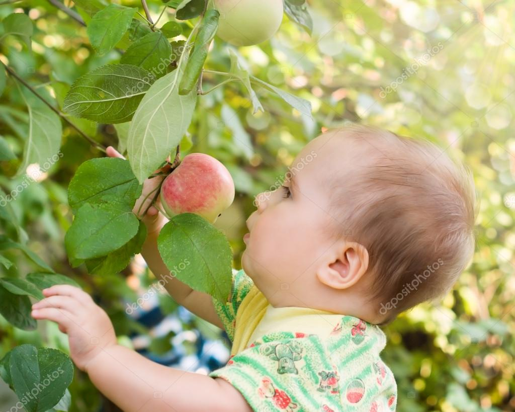 Adorable baby girl looking red apple in the fruit garden under an apple tree
