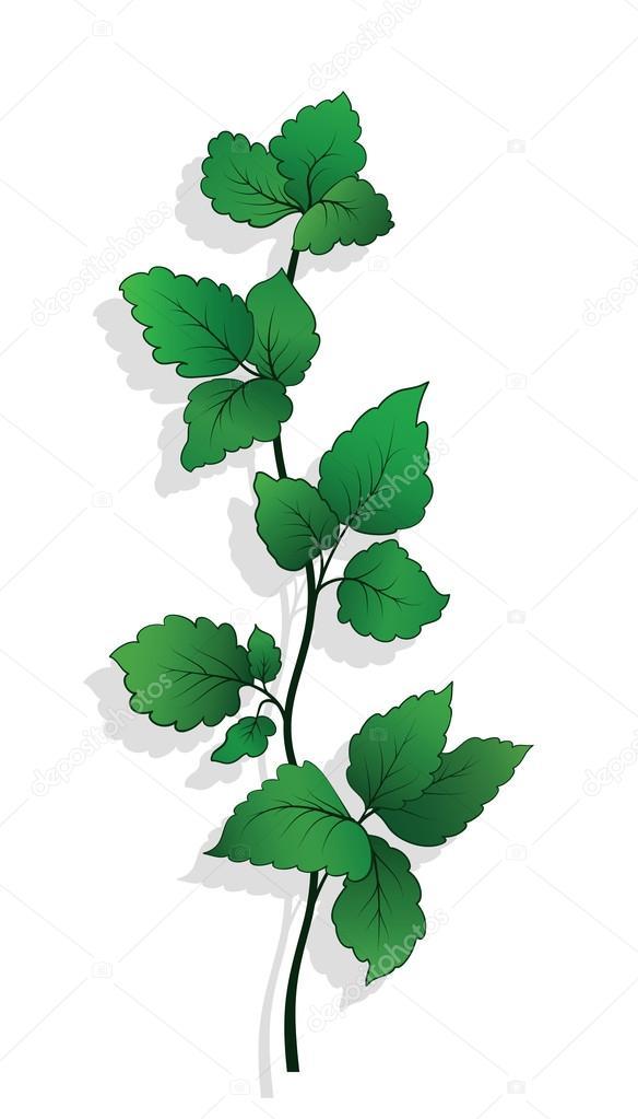 Green twig