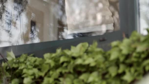 alte Frau Reinigung Fensterglas zu Hause