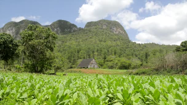 Nature and landscape, hills and mountains in Vinales, Cuba