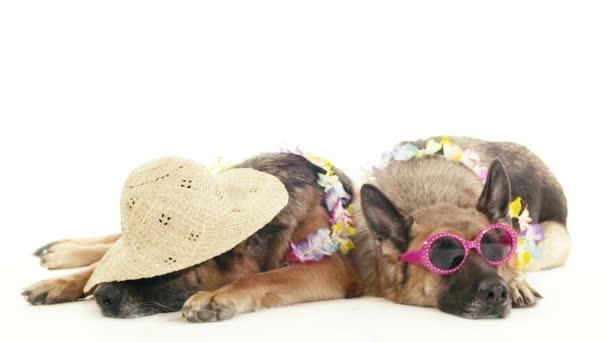 Hunde mit Hut und Sonnenbrille.