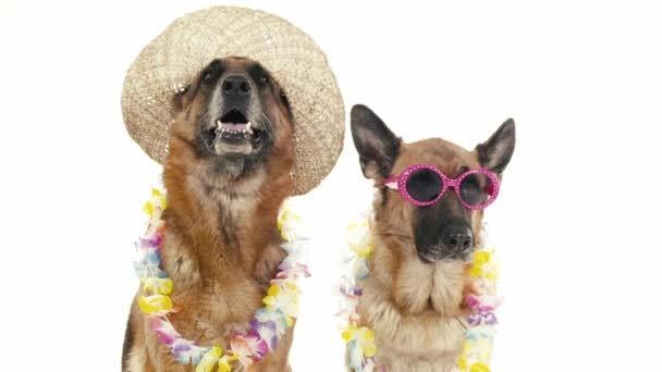 psi s kloboukem a sluneční brýle.
