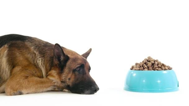 Hund mit Schüssel Futter