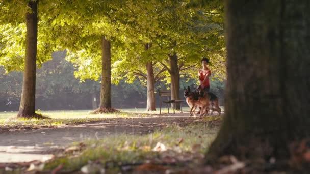 Frau mit Schäferhunden im Park.