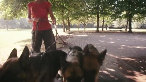 dívka s německých ovčáků v parku