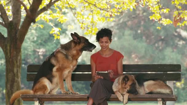 Woman working as dog sitter with german shepherd dogs in park, using digital tablet computer for web and e-mail