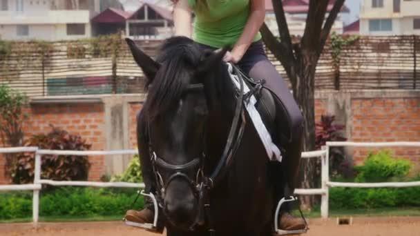 gyönyörű lány lovaglás fekete ló