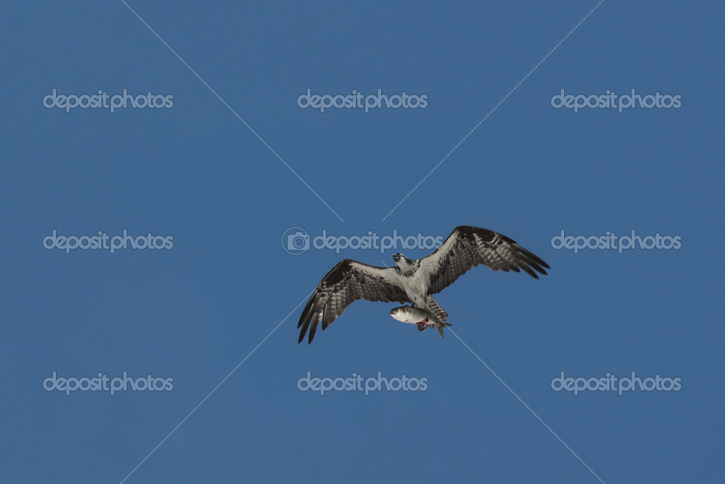 Δωρεάν για την. Συναφείς εικόνες: ράμφος πουλί φύση ζώο άγρια ζώα.