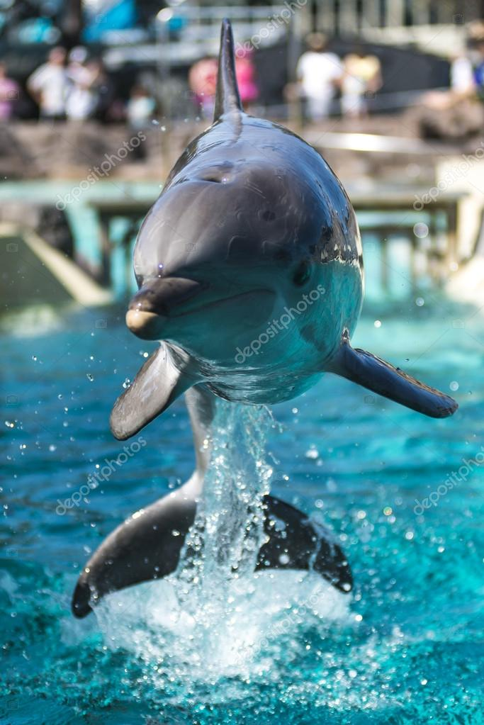 Фотообои Dolphin Jumping from the water