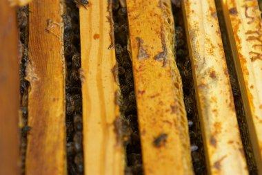 "Картина, постер, плакат, фотообои ""дома в ульях пчел."", артикул 24066879"