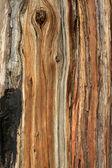 sfondo texture corteccia di albero