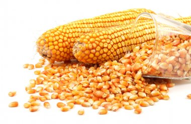 Grain corn closeup on a white background