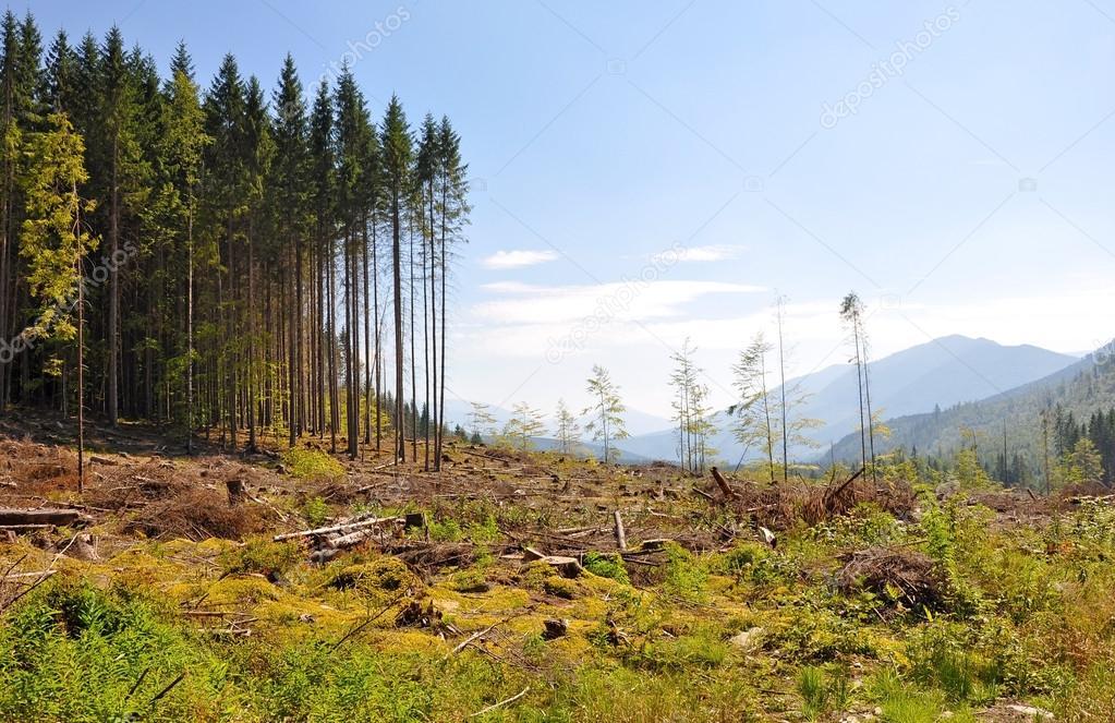 Deforestation disaster