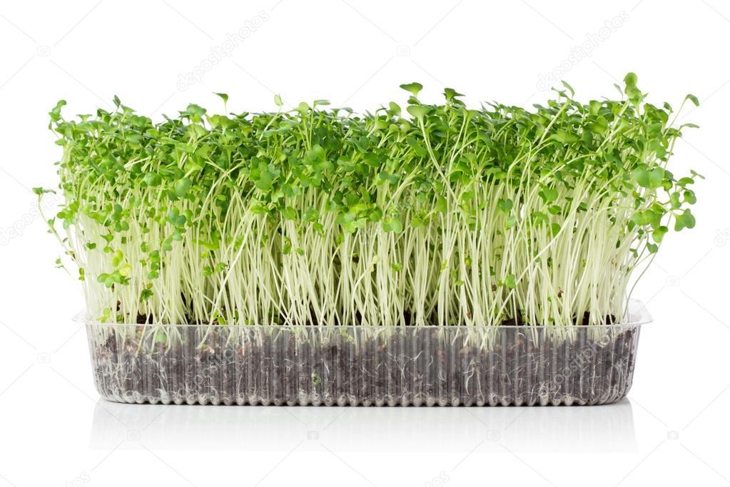 how to grow microgreens outdoors