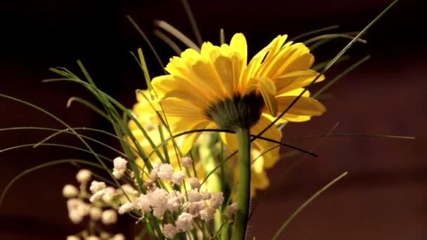žluté sedmikrásky v váza
