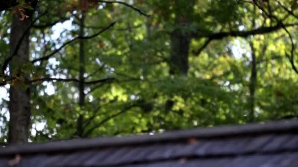 Cedar dřevěné střešní šindele a vzrostlými stromy na pozadí