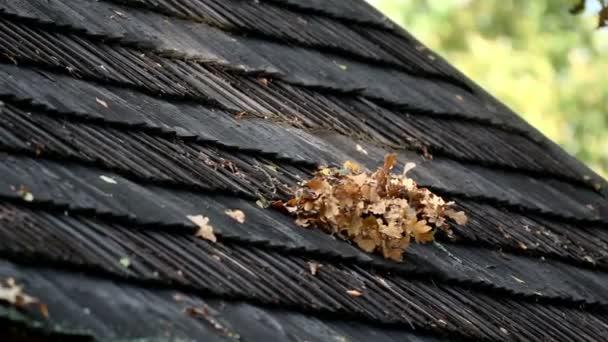 zvadlé listí na střešní šindele
