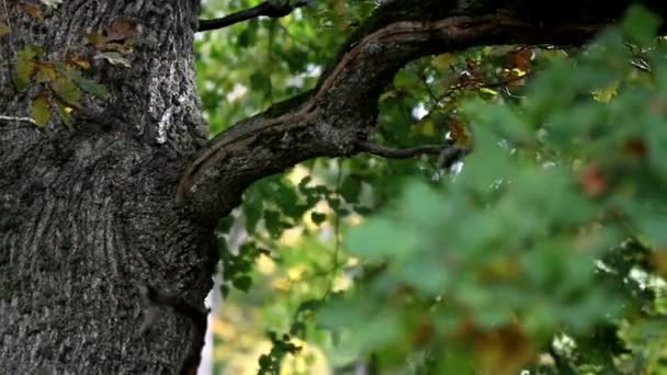 Image of oak tree branch and some leaves