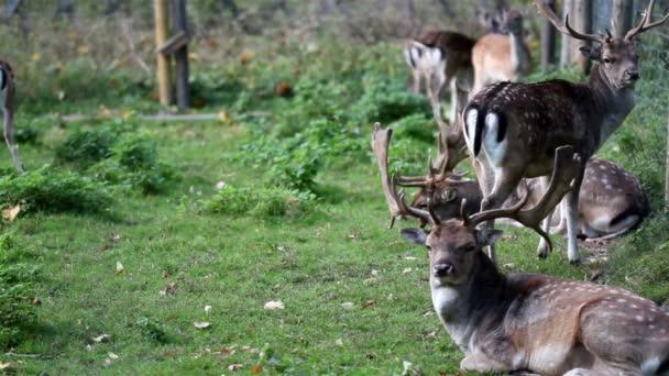 stádo divokých jelenů s parohy