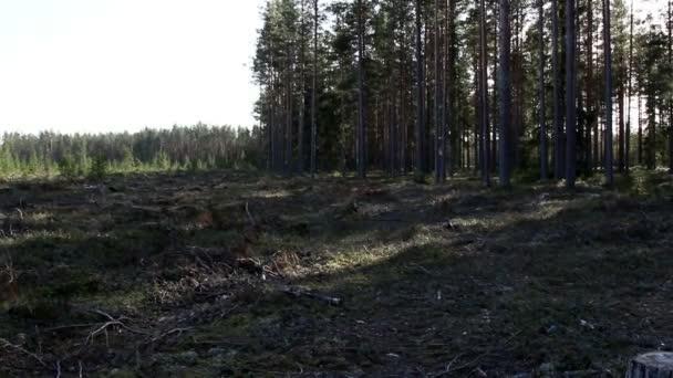 sok fa a csonkot erdő
